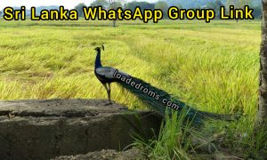 700+ Sri Lanka WhatsApp Group links ( Join Sri Lanka Group Chat )